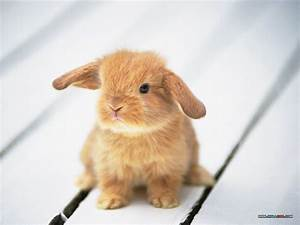 Bunny | Unique Wallpaper