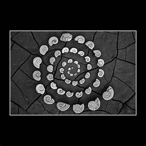 Maclurites Spiral Galaxy