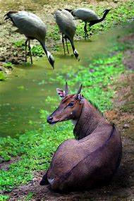 Amazing Nature Photography Animals