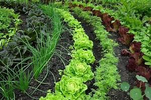 Landscape Focused Landscape Garden Design Ideas