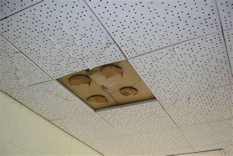 top 28 tile flooring removal cost asbestos floor tile