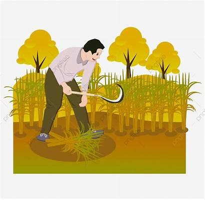 Crops Harvest Clipart Crop Cartoon Harvesting Farmer