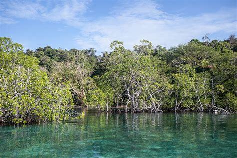 Massive Mangrove Dieback In Australia, A Climate Tragedy