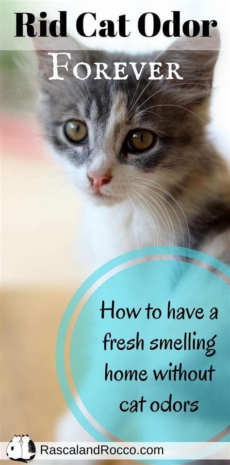 ideas  odor eliminator  pinterest