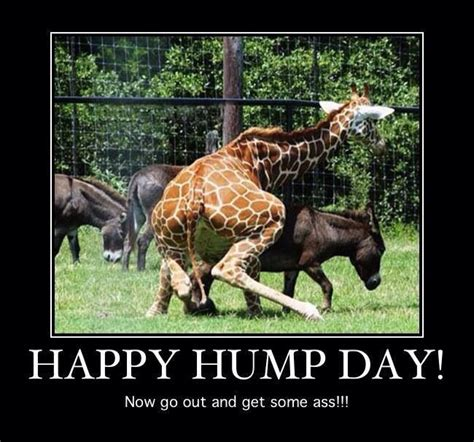 Funny Hump Day Memes - happy hump day wednesday funnies pinterest more funny memes funny shit and memes ideas