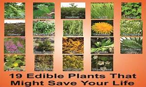 Surviving In The Wild 19 Common Edible Plants That Just