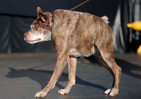 ugliest dogs in the world time com
