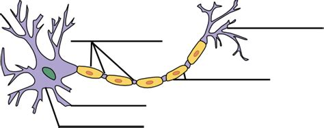 label the neuron clip at clker vector clip