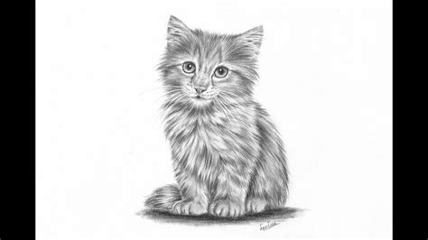 How To Draw A Realistic Kitten Part 2: Fur And Details