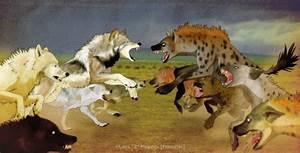 lion vs wolf