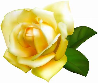 Rose Yellow Transparent Clipart Roses Tube Yopriceville