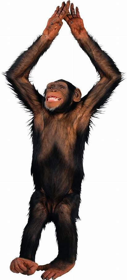 Monkey Transparent Background Animals