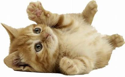 Cat Cats Kitten Kittens Animals Kitty Animal