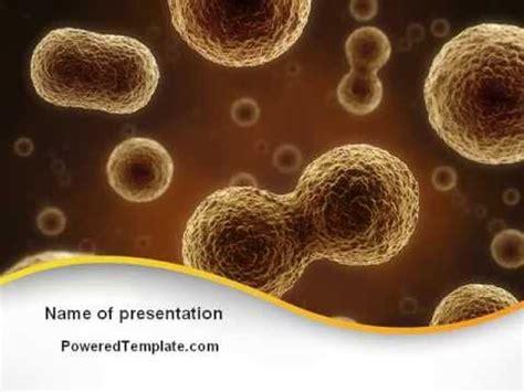 cell meiosis powerpoint template  poweredtemplatecom
