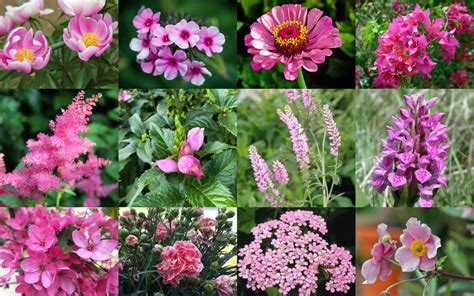 pink flowers  names  pictures florgeous