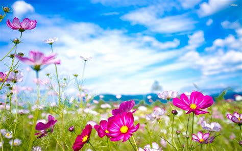 Flowers Awesome Wallpapers 8212  Hd Wallpaper Site