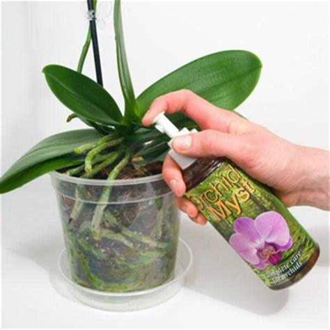 caring for an orchid after it blooms caring for orchids