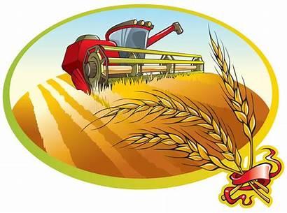 Wheat Harvesting Machine Farm Farmer Combine Field
