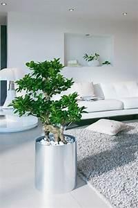 Zimmerpflanzen Feng Shui : ber ideen zu feng shui einrichten auf pinterest woody m bel feng shui und lichtspiegel ~ Indierocktalk.com Haus und Dekorationen