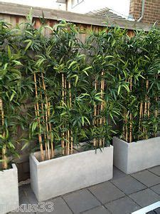 growing bamboo in containers 1000 images about bamboo planter on bamboo 4105