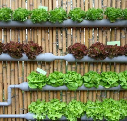 canapé palette bois culture hydroponique cultiver des plantes sans terre