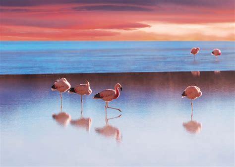 chambre pour ado le lac aux flamants roses tableau géant oiseaux échassiers