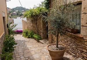 Olivenbaum Im Topf : einen olivenbaum umtopfen so macht ihr es richtig ~ Michelbontemps.com Haus und Dekorationen