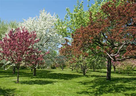 Baum Für Kleinen Garten by Die Sch 246 Nsten B 228 Ume F 252 R Den Eigenen Garten