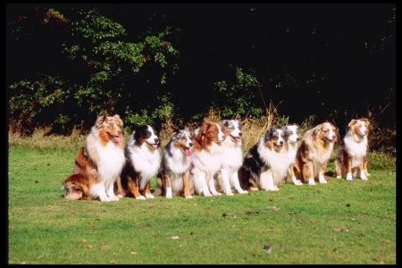dogs lined  dogs animals background wallpapers