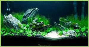 Aquarium Gestaltung Bilder : aquarien beispiele aquarienmoos ~ Lizthompson.info Haus und Dekorationen