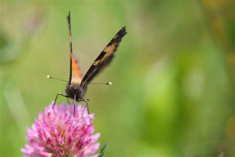 bureau d etude biodiversite fidal partenaire de la matin 233 e biodiversit 233 de la