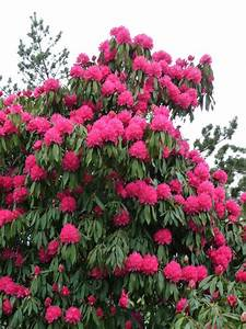 Petit Arbuste Fleuri : petit arbre paris c t jardin ~ Premium-room.com Idées de Décoration