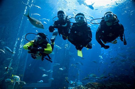 dive in diving in dubai to fujairah where to go scuba diving in