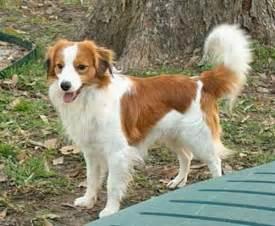 Cute Medium-Sized Dog Breeds