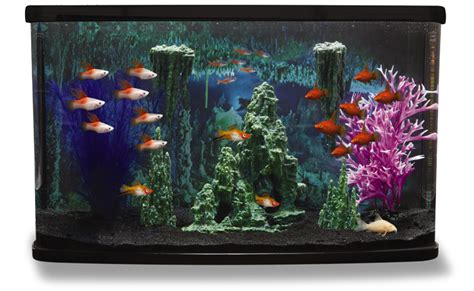 Lava L Fish Tank Petsmart by Fish Tanks Tank Supplies And Decorations Bundle