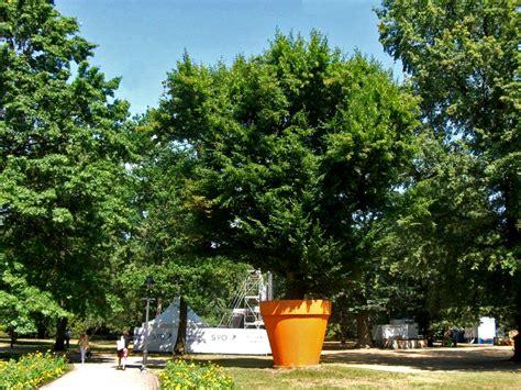 Baum Kübel Winterhart by Ein Gro 223 Er Baum In Einem Blumentopf Foto Bild