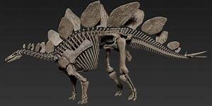 Vitamin Imagination - Stegosaurus Skeleton