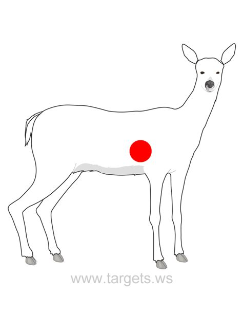targets print   animal shooting targets