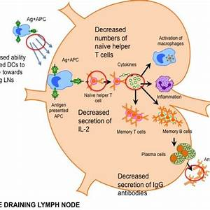 How To Lymph Nodes Drain