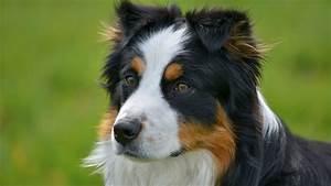 Hund In Mietwohnung Trotz Verbot : k nnen hunde unsere angst riechen welt der wunder tv ~ Lizthompson.info Haus und Dekorationen