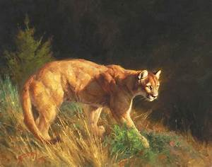 cougar - puma - mountain lion - painting by Greg Beecham ...