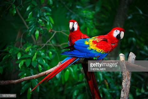 Pictures Images Parrot Stock Photos And Pictures Getty Images
