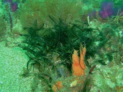 Plants Algae Ocean Animals Gifs Lowgif Giphy