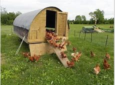 Chicken Coop Ideas Designs And Layouts For Your Backyard