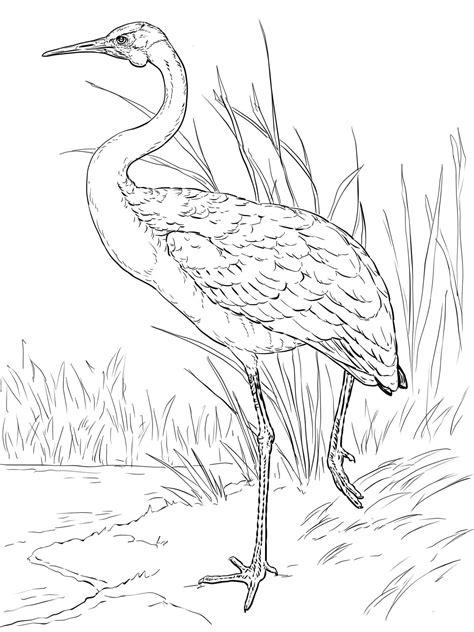 crane coloring pages    print