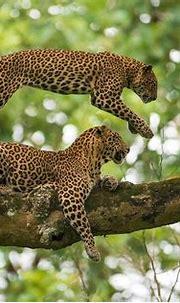 10 Lesser Known Wildlife Sanctuaries in India - Rare Species