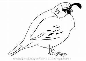 Learn How To Draw A Quail Birds Step By Step Drawing