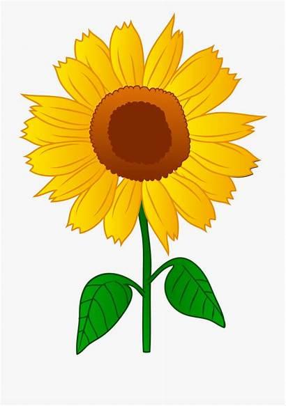Sunflower Border Clip Clipart Transparent Sunflowers Background