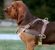 leder brustgeschirr hund fuer bloodhound multifunktionell