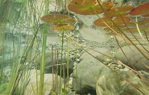 Kostenlose Foto   Wasser  Pflanze  Fotografie  Blatt  Teich  Unterwasser  Gr U00fcn  Botanik  Fauna